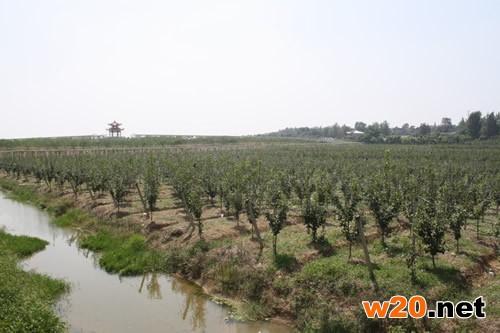 镇江生态农业