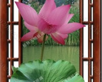西安彩釉玻璃挂画 荷花